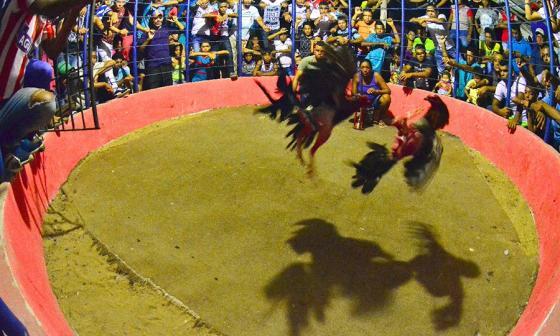 Primer aval a ley que prohíbe en el país corridas de toros, corralejas y peleas de gallos