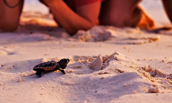 La millonaria pareja que no se pudo casar en la playa por culpa de las tortugas
