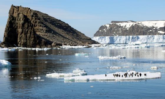 El sorprendente hallazgo de más de 1,5 millones de pingüinos en el Antártico