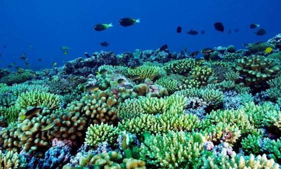 Estudio revela que vida marina salvaje está desapareciendo