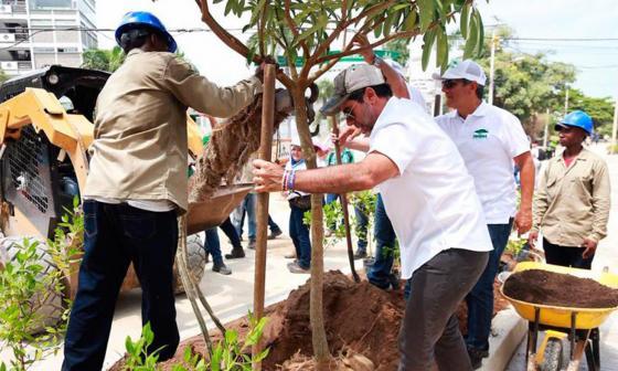 Van 23.000 árboles sembrados en Barranquilla