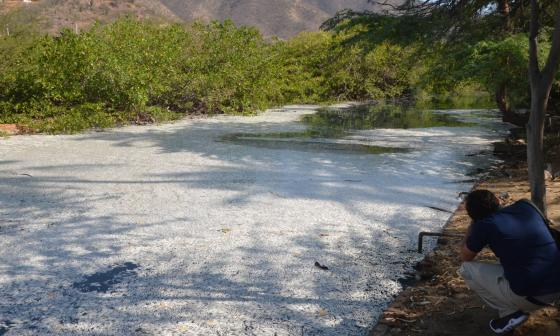 Recogen 1,5 toneladas de peces muertos del canal de El Rodadero
