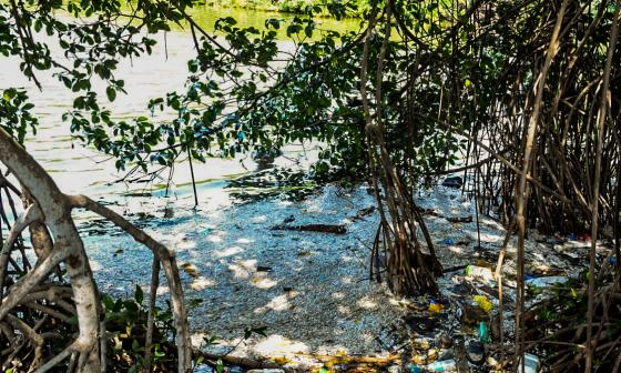 Alerta por masiva mortandad de peces en caños de Cartagena