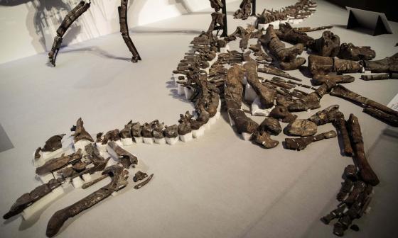 Hallan en Japón una nueva especie de dinosaurio