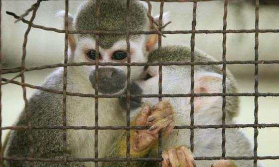 Informe revela que comercio mundial de vida silvestre afecta una de cada cinco especies