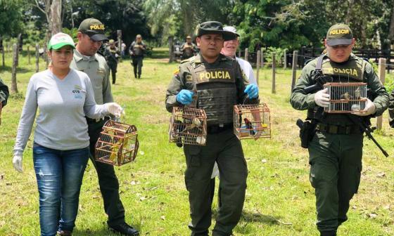 Morrocoyas , boas y aves vuelven a su hábitat en Córdoba