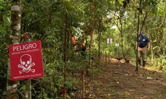 En video | Desminar Colombia, la tarea de los exguerrilleros que sembraron explosivos