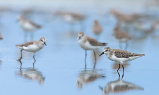 Ciénaga de Mallorquín, el paraíso de las aves en Barranquilla