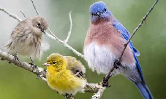 Colombia se consolida como líder mundial en avistamiento de aves