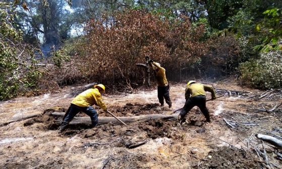 En video | En Salamanca 102 hectáreas fueron consumidas por las llamas