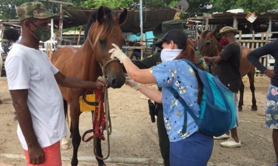 Una veterinaria atiende a parte de los caballos cocheros.