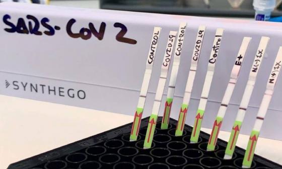 Pruebas moleculares rápidas para detectar enfermedad de COVID-19.