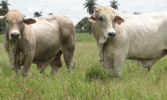 Gobernación de Córdoba impulsa proyectos de emprendimiento rural