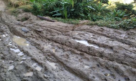 Lluvias tienen en jaque a caficultores en la Sierra Nevada