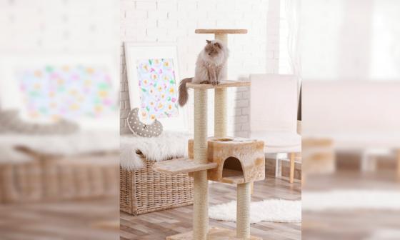 Gimnasio para gato en un espacio del hogar.