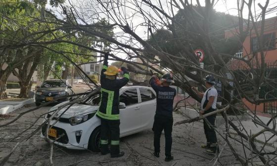 El cuerpo de Bomberos levanta caída de un árbol.