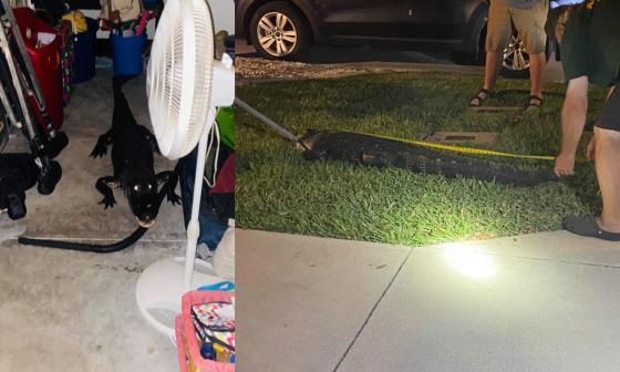 Familia en EE. UU encuentra un caimán de dos metros en su garaje