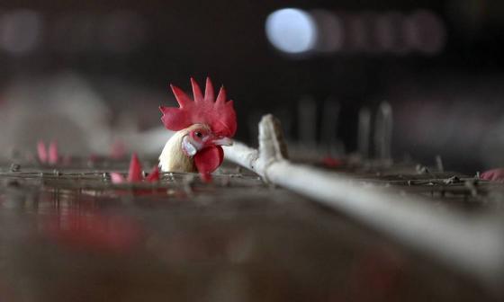 China detecta el primer caso mundial de gripe aviar H10N3 en humanos