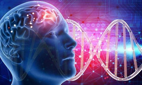 Científicos desentrañan el mecanismo cerebral que regula la ansiedad