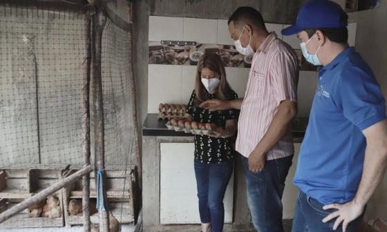 Gallinas ponedoras, fuente de ingresos para familias rurales