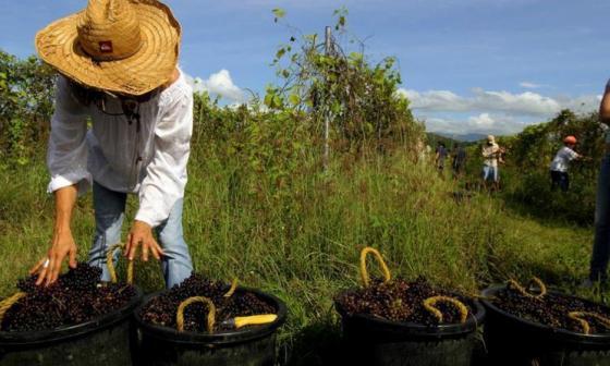 Agricultores colombianos ya tienen plataforma integral de comercio electrónico