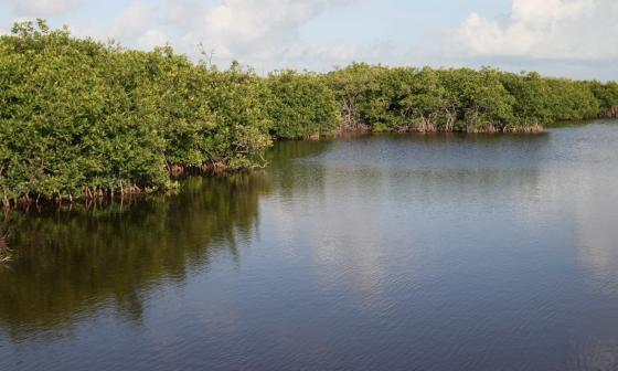 Procuraduría urge por la protección de los ecosistemas carbono azul