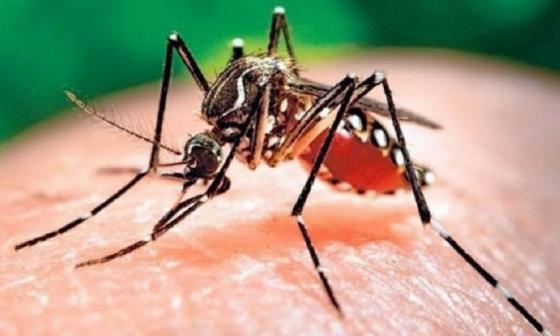 En Sabanalarga fallece menor de 11 años diagnosticado con dengue