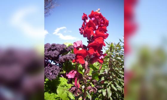 Mueren dos niños tras comer fruto tóxico de planta sembrada en su jardín