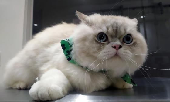 Mascotas Wasapea | Piden ayuda para encontrar a 'Kitty'