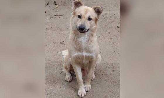 Mascotas Wasapea | Ayudemos a 'Dio' a regresar con sus dueños