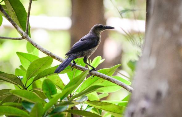 Estas son las aves en riesgo por el fuego en Isla Salamanca