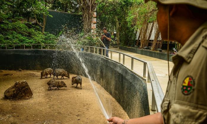 Un trabajador del Zoológico baña a una de las especies que se exhiben.