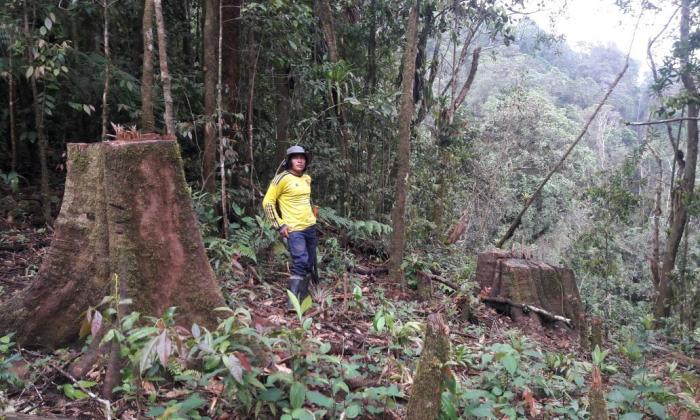 ¡Crimen ecológico en Sierra Nevada!: Talan árboles para una obra eléctrica