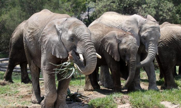 Milicias y cazadores furtivos, amenaza para la fauna de África central