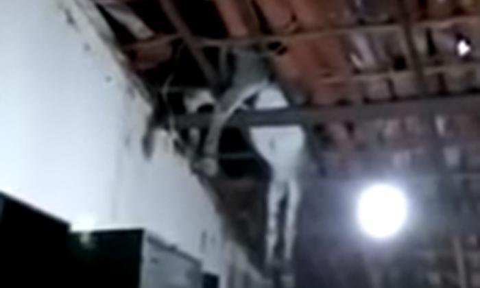 En video | Un burro cae en el techo de una casa y se queda atascado