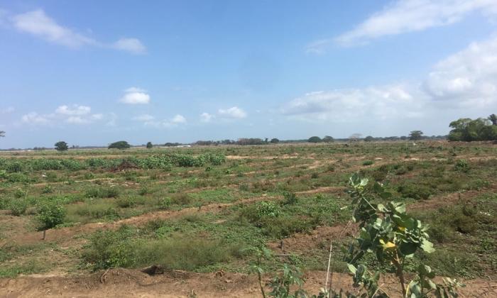 Sancionan a empresa en La Guajira por deforestación de 400 hectáreas