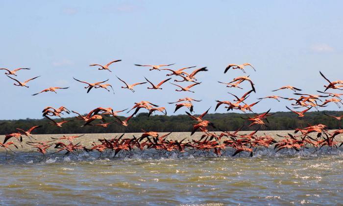 El Santuario de los flamencos, la gran 'perla' ambiental  y cultural de La Guajira