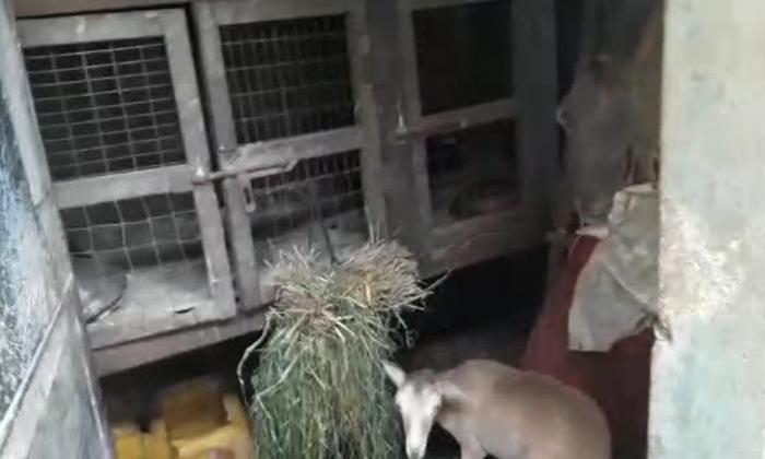 En video | Rescatan 50 animales en cautiverio en el centro de Barranquilla