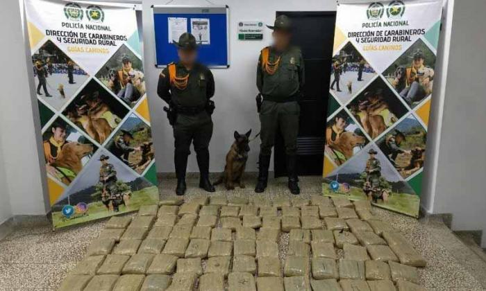 Marihuana encontrada por perro antinarcoticos e incautada en empresa de envíos.
