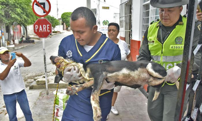 Perro abandonado en San Roque fue rescatado por Policía Ambiental