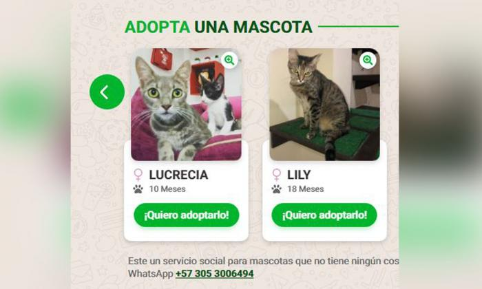 Para tener mayor información de la mascota, el usuario podrá dar clic en la opción 'Quiero adoptarlo'.