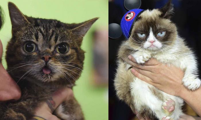Lil Bub y Grumpy Cat