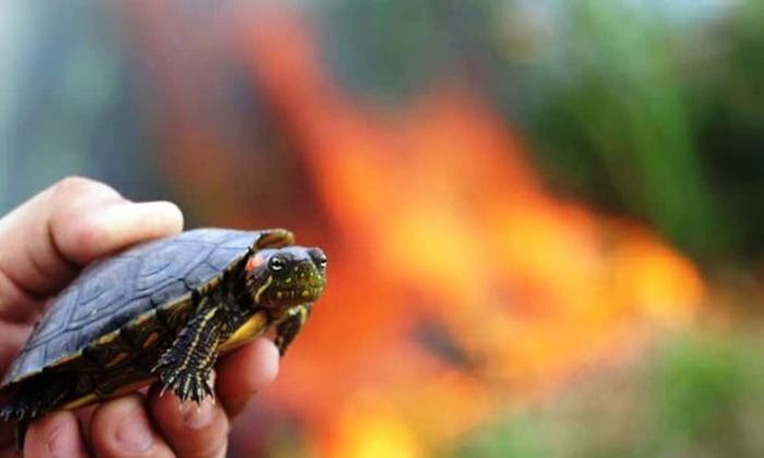 Centenares de animales, las víctimas del incendio en la Ciénaga de Cereté