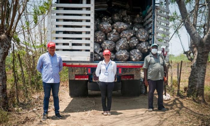 """""""A los cultivadores de yuca de Sucre ya nos pasó el susto"""""""