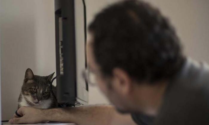 Mascotas a domicilio: la adopción se reinventa en Brasil por la pandemia