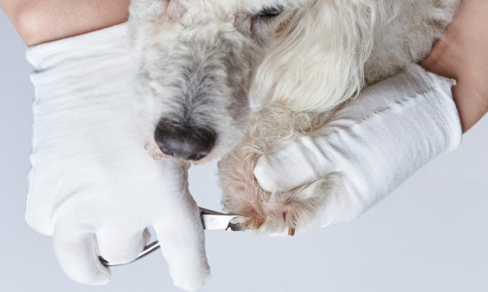 ¿Cuándo y cómo cortarles las uñas a nuestras mascotas?
