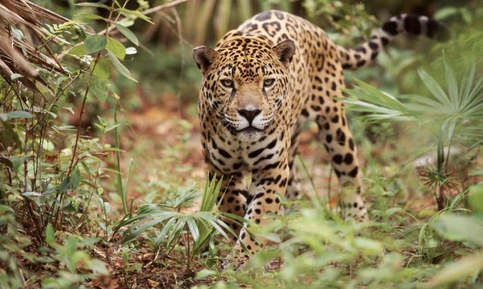 Latinoamérica en alerta roja por pérdida de biodiversidad