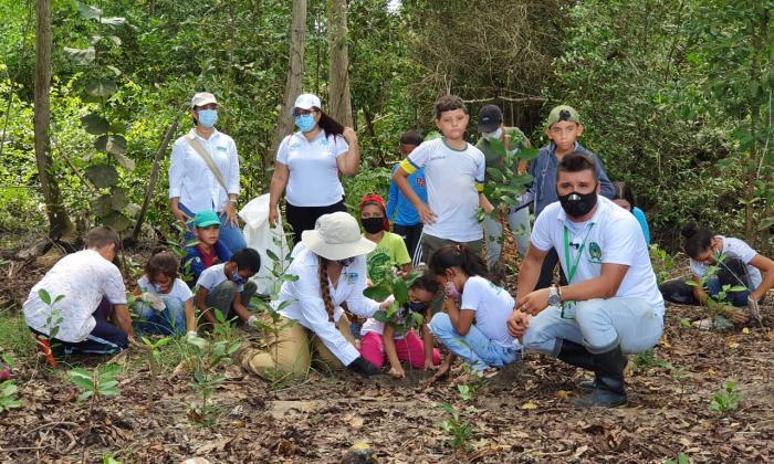 Niños sembraron 270 árboles de mangle en Cabañas de Buritaca