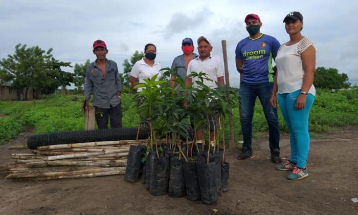 Sembraron 5 mil árboles en Magdalena