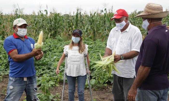 La gobernadora Elsa Noguera inspecciona cultivos de maíz en fincas del municipio de Manatí.